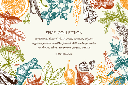 Vector card design with hand drawn spices and herbs.