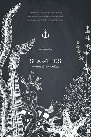 Vector card design with hand drawn sea corals, fish, stars sketch. Reklamní fotografie - 122416575