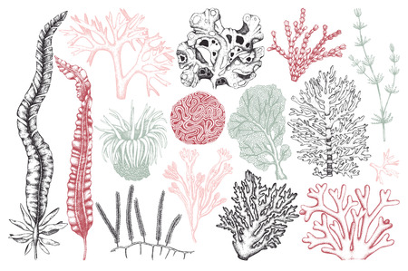 Vector collection of hand drawn seaweeds, corals