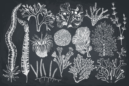 Decorative collection of plant