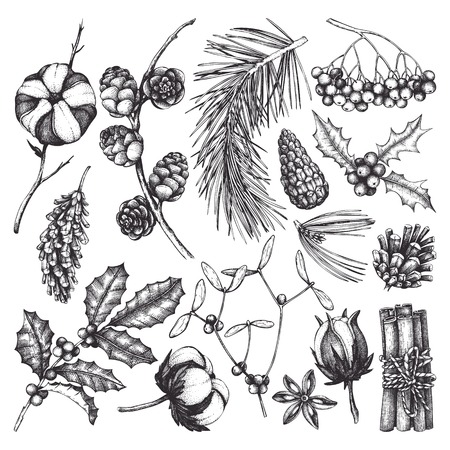 Vector collection of hand drawn christmas decor elements with bird. Vintage winter plants sketch set. Conifers, berries, flowers, cones, seeds illustration. Outlines .