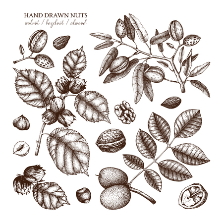 Vector collection of hand drawn nuts sketches.