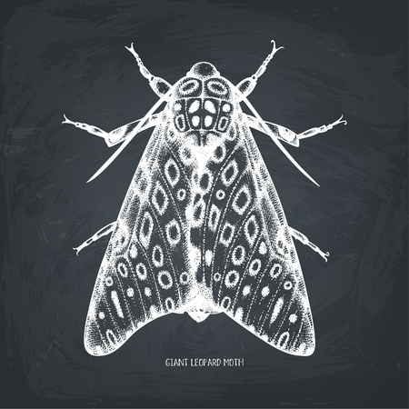 High detailed  of leopard moth.