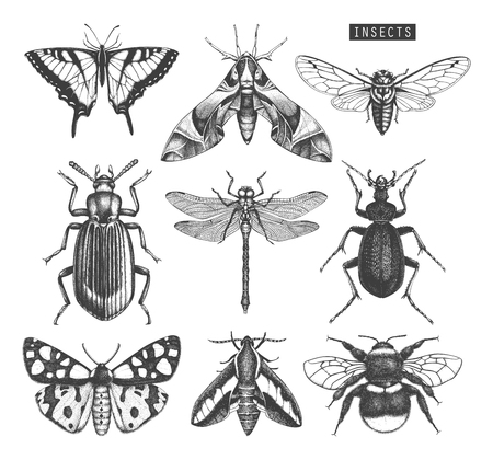 Vektorsammlung von hochdetaillierten Insektenskizzen. Vektorgrafik