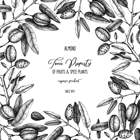 Vector Almond background. Hand drawn nut tree sketch. Botanical design template. Vintage tonic plant drawing