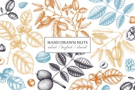 Vector design with hand drawn nuts sketches. Vintage hazelnut, walnut, almond illustrations. Organic food template for packing, branding, card designs on white background.