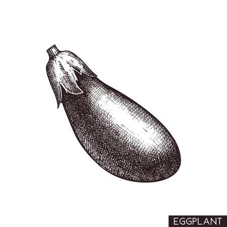 Vector illustrations of eggplant. Hand drawn vegetable in engraved style. Healthy food drawing. Product for menu design.