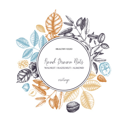 Vector design with hand drawn nuts. Vintage hazelnut, walnut, almond illustrations. Engraved style organic food background. Menu, branding, packing, cards template.
