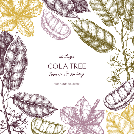 Vector Cola tree vintage sketch. Vintage design with hand drawn with leaves, flowres, fruits and seeds. Botanical frame template. Aromatic elements illustration.
