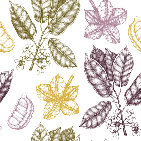 Vector Cola tree illustration. Vintage background with hand drawn with leaves, flowres, fruits and seeds. Botanical seamless pattern. Aromatical elements sketch.