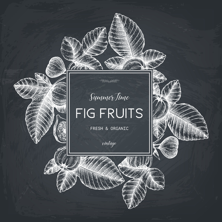 Vector design with hand drawn figs sketch. Vinatge frame with botanical illustration of fig fruit branch. Retro pattern with summer elements on chalkboard