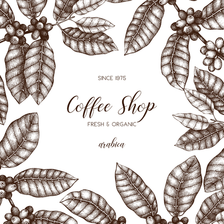 Vector design with hand drawn coffee plant sketch. Botanical illustration of Arabica with fruits. Vintage coffee packaging template.