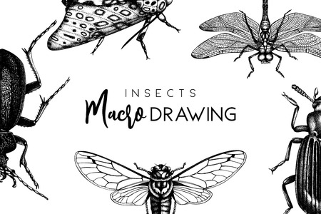 Vector background with hand drawn insects illustrations. Vintage butterfly, cicada, beetle, bug, dragonfly drawing. Entomological vector template design.