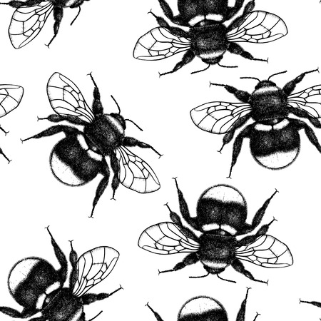 Vector background with bumlebee drawings. Hand drawn insect sketch isolated on white. Engraving style bumble bee illustrations. Vintage seamless pattern