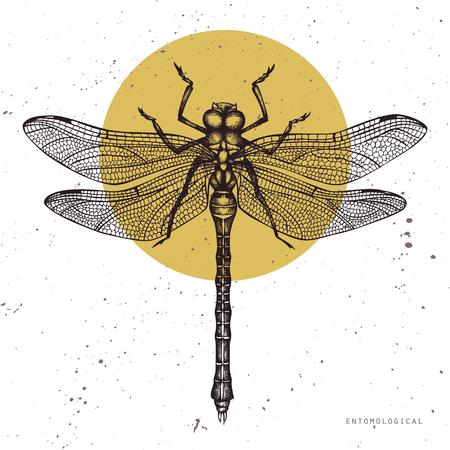 Illustrazione vettoriale di libellula disegnata a mano. Collezione di schizzi di insetti Vinatge. Modello di progettazione primaverile.