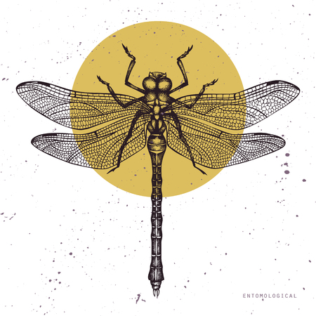 Vector illustration of hand drawn dargonfly. Vinatge insects sketch collection. Spring design template.