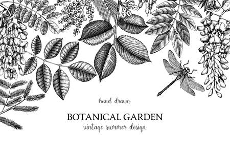 Conception vectorielle avec branche dessinée à la main, feuilles, graines, cônes, croquis de fruits. Cadre vintage avec éléments botaniques. Arbres et illustrations de libellules