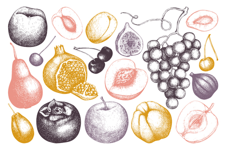 Vintage fruits and berries - fig, apple, pear, peach, apricot, persimmon, pomegranate, quince, grapes. Hand drawn harvest sketch. Summer or autumn design. Illustration