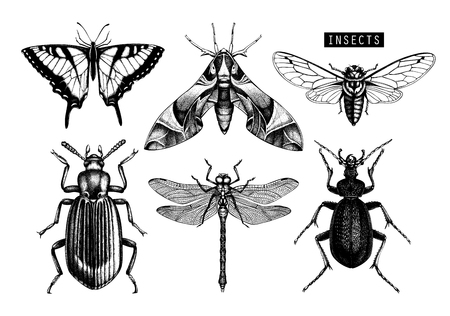 Vector collection of hand drawn insects illustrations. Black butterflies, cicada, beetle, bug, dragonfly drawing. Entomological sketch set.