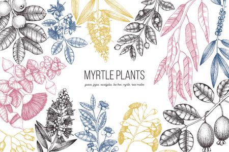 Conception botanique avec mirtles dessinés à la main - arbre à thé, eucalyptus, goyave, myrtus, croquis de feijoa. Plantes médicinales pour huiles essentielles. Modèle de cadre d'arbres exotiques