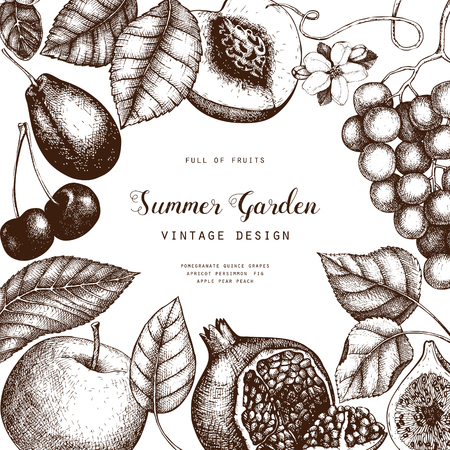 Vintage collection of ripe fruits illustrations - fig, pear, apple, apricot, persimmon, pomegranate, quince, grapes. Hand drawn harvest sketch set. Summer or autumn design on chalkboard Illustration