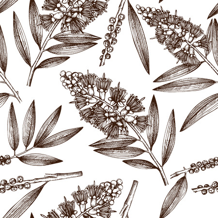 Vintage background with Hand drawn tea tree sketches. Cosmetics and myrtle plant seamless pattern. Vector cajeput tree leaves and seeds