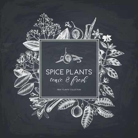 Vector card design with hand drawn spices. Decorative background with aromatic and tonic fruits plants sketch. Vintage kitchen template. Food ingredients on chalkboard
