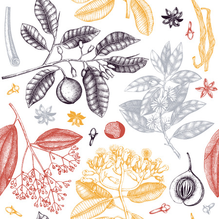 Vector background with tonic and spicy plants. Hand drawn seamless pattern with spices illustrations. Vintage aromatic elements. Sketched flowers, leaves, seeds, fruits, nuts, beans.