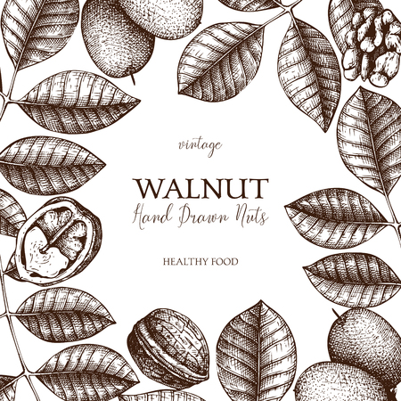 Walnut botanical illustration. Vintage design template for branding, flyer, packing, cards or invitations. Vector Vector frame with hand drawn nuts, leaves, fruits.
