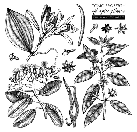 Vector collection of tonic and spicy plants - nutmeg, star anise, clove tree. Hand drawn spices illustrations set. Vintage aromatic elements. Sketched flowers, leaves, seeds, fruits.