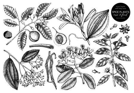 Collection vectorielle d'épices dessinées à la main. Ensemble décoratif de croquis de plantes fruitières aromatiques et toniques. Illustrations de cuisine vintage. Ingrédients alimentaires et cosmétiques.