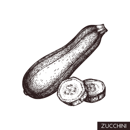 Vector illustrations of Zucchini. Hand drawn vegetable in engraved style. Healthy food drawing. Product for menu design. Ilustracja