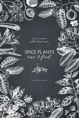 Vector card design with hand drawn spices. Decorative background with aromatic and tonic fruits plants sketch. Vintage kitchen template. Food or cosmetics ingredients.