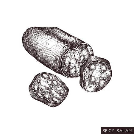 Vector illustration of spice salam. Engraved style food drawing isolated on white. Vintage meat product sketch. Pizza Pepperoni hand drawn ingredients.