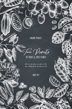 Vector design template with tonic and spicy plants. Hand drawn spices illustrations. Vintage frame with aromatic elements. Sketched flowers, leaves, seeds, fruits, nuts, beans.