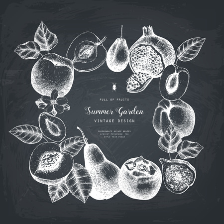 Vintage collection of ripe fruits  illustrations - fig, apple, pear,  peach, apricot, persimmon, pomegranate, quince, grapes. Hand drawn fruits sketch set. Botanical vector design on chalkboard