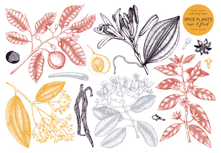 Vector collection of hand drawn spices. Decorative set of aromatic and tonic fruits plants sketch. Vintage kitchen illustrations. Food ingredients.