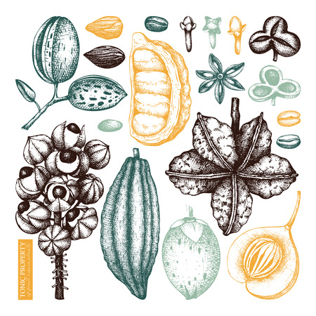 Vector collection of tonic and spicy plants. Hand drawn spices illustrations. Vintage set of aromatic elements. Sketched flowers, leaves, seeds, fruits, nuts, beans. 矢量图像