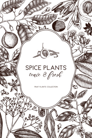 Vector card design with hand drawn spices. Decorative background with aromatic and tonic fruits plants sketch. Vintage kitchen template. Food ingredients.