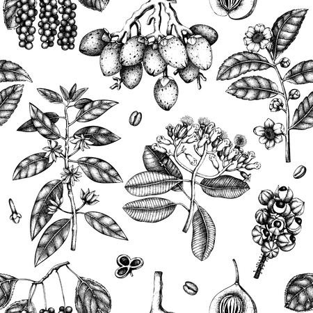 Vector background with tonic and spicy plants. Hand drawn seamless pattern with spices illustrations. Vintage aromatic elements. Sketched flowers, leaves, seeds, fruits, nuts, beans. Vettoriali