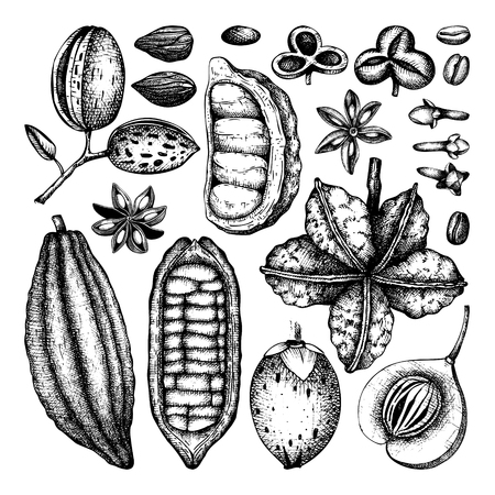 Vector collection of tonic and spicy plants. Hand drawn spices illustrations set. Vintage aromatic elements. Sketched flowers, leaves, seeds, fruits, nuts, beans. Vettoriali