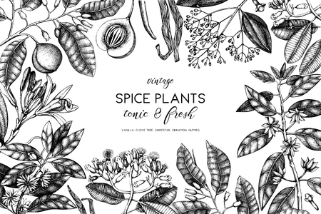 Graphic design with hand drawn spices. Decorative background with aromatic and tonic fruits plants sketch. Vintage kitchen template. Food ingredients.
