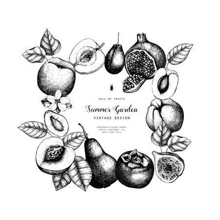 Vintage collection of ripe fruits illustrations - fig, pear, apple, apricot, persimmon, pomegranate, quince, grapes. Hand drawn fruits sketch set. Botanical vector design
