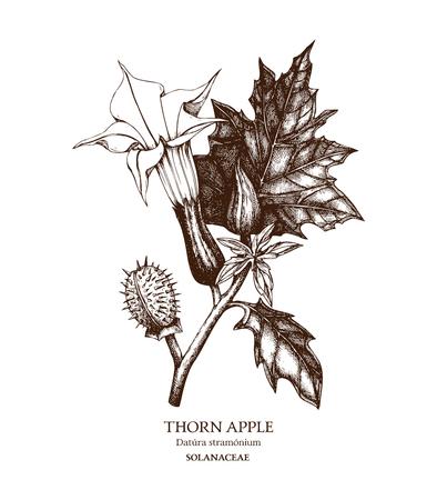Schizzo disegnato a mano della pianta velenosa - Datura stramonium. Fiore pericoloso Vettoriali