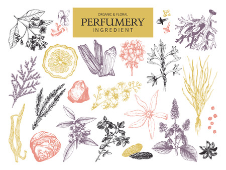 Vector collection of hand drawn perfumery materials and ingredients. Vintage set of aromatic plants for perfumes and cosmetics.
