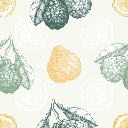 Bergamot fruit, slice and leaves sketch. Vintage citrus background in pastel colors Stock Illustratie