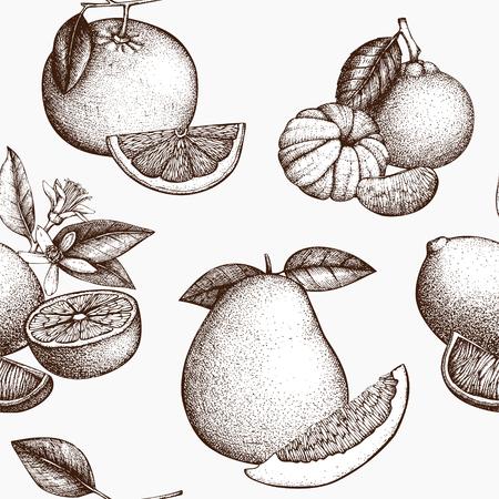 Owoce cytrusowe na białym tle. Tło wektor z bardzo szczegółowymi owocami cytrusowymi