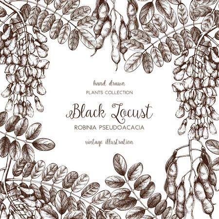 Vektorkarten- oder Einladungsdesign mit handgezeichneten Robinienblumen. Vintage-Rahmen mit Robinie-Skizze auf weißem Hintergrund. Blumenhochzeitsschablone. Merken Sie den Termin vor. Vektorgrafik