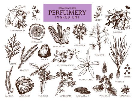 Colección de vectores de materiales e ingredientes de perfumería dibujados a mano. Conjunto vintage de plantas aromáticas para perfumes y cosmética.