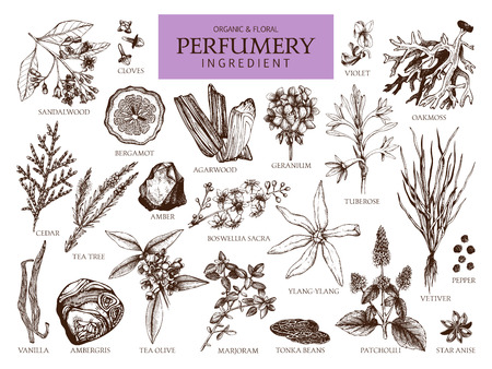 Vector collection of hand drawn perfumery materials and ingredients. Vintage set of aromatic plants for perfumes and cosmetics. Фото со стока - 122851690